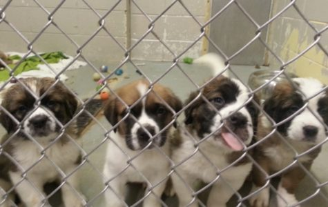 California Set to Become the First State to Ban the Sale of Non-Rescue Animals in Pet Shops