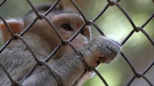 The Cruelty of Zoos