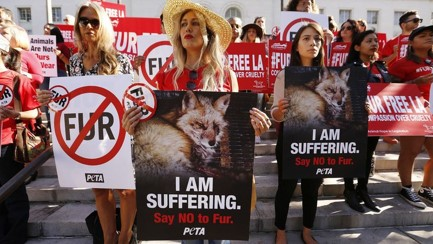 Fur Trade: Is it right or wrong?